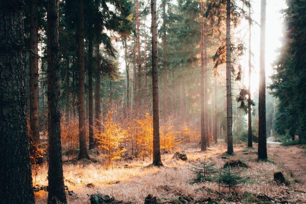 šumski požar